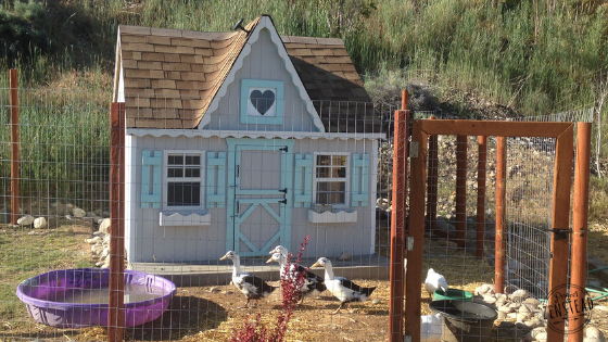 Behind the Scenes: Chicken Coop Tour