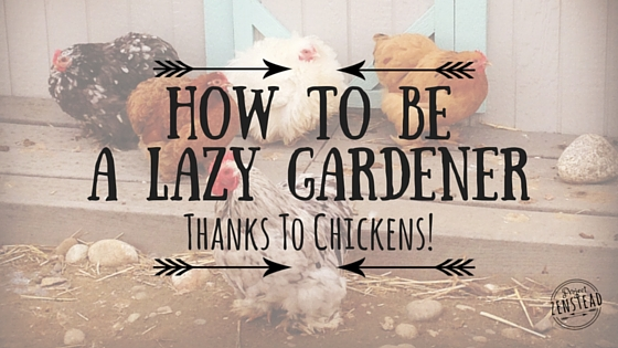 7 Legit Reasons Every Lazy Gardener Needs Chickens