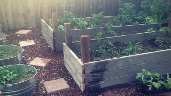 Five Myths About Backyard Farming That Need to Stop