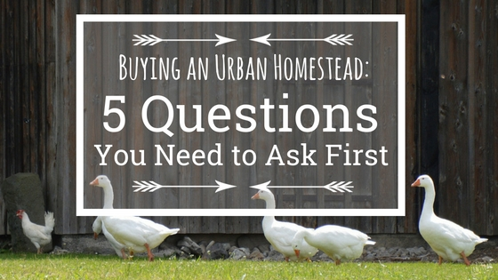Buying a Homestead Property: Five Questions You Need to Ask First!