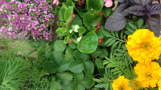 Four Tips for Planning Your Best Garden Yet + Free Planning Worksheets