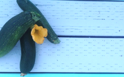 Ten Creative & Delicious Ways to Use all that Zucchini