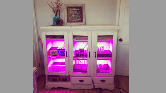 How to Make a DIY Grow Light System for Seed Starting